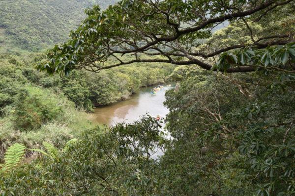 黒潮の森マングローブパーク