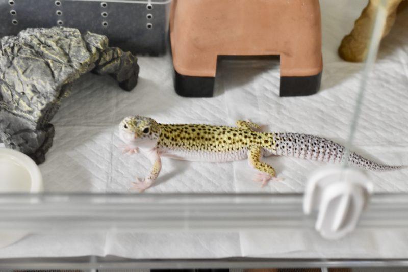 ジェックス ハビんぐ グラスハーモニー 小動物用 マルチ600